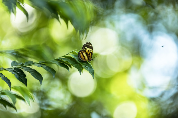 5-Schmetterling_im_Amazonas